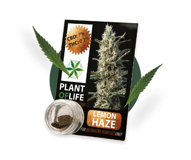 Product shot of CBD Solid from Plant of life brand.