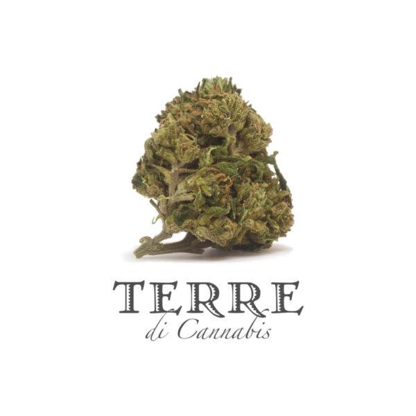 Ανθοί κάνναβης Terre Di Cannabis Perla με 20% CBD