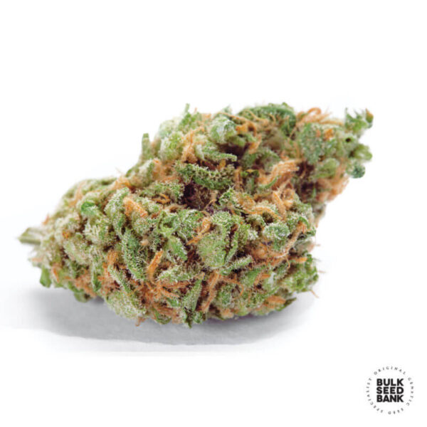 Bulk Seed Bank Autoflowering Cannabis Seeds - AUTO AMNESIA HAZE bud image.