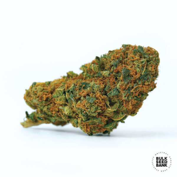 Bulk Seed Bank Autoflowering Cannabis Seeds bud image. Bubble gum extra.