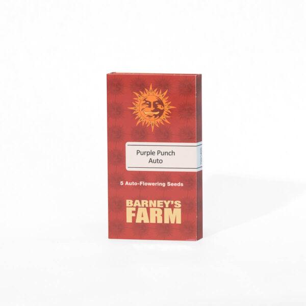 Barneys Farm - Αυτόματοι Σπόροι Κάνναβης - Purple Punch Auto - 3τεμ - προιόν