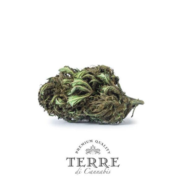 Terre Di Cannabis Briosa CBG - 2gr. - buds photo