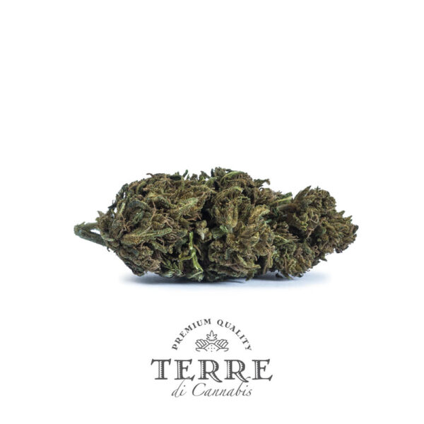 Terre Di Cannabis Diva - 2gr. - buds photo - 2