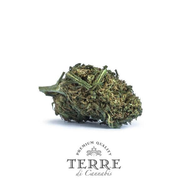 Terre Di Cannabis Fatale CBG - 2γρ. - ανθός φυτού