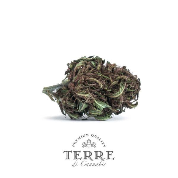 Terre Di Cannabis Stella - 2gr. - bud's photo