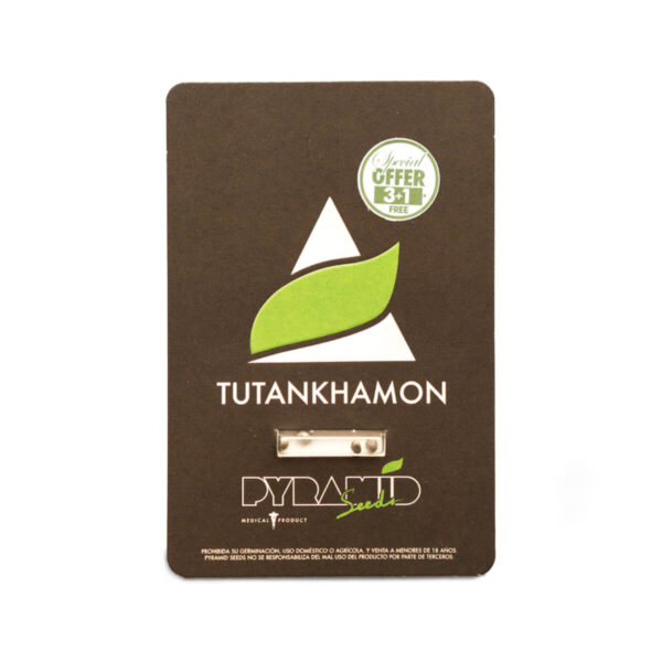 Pyramid Seeds | Feminized Cannabis Seeds - Tutankhamon - 3+1pcs - products photo